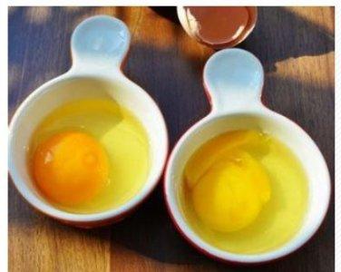egg.thumb.JPG.dc1f285a38237e26107ff51b5925016c.JPG