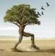 Walkingtree
